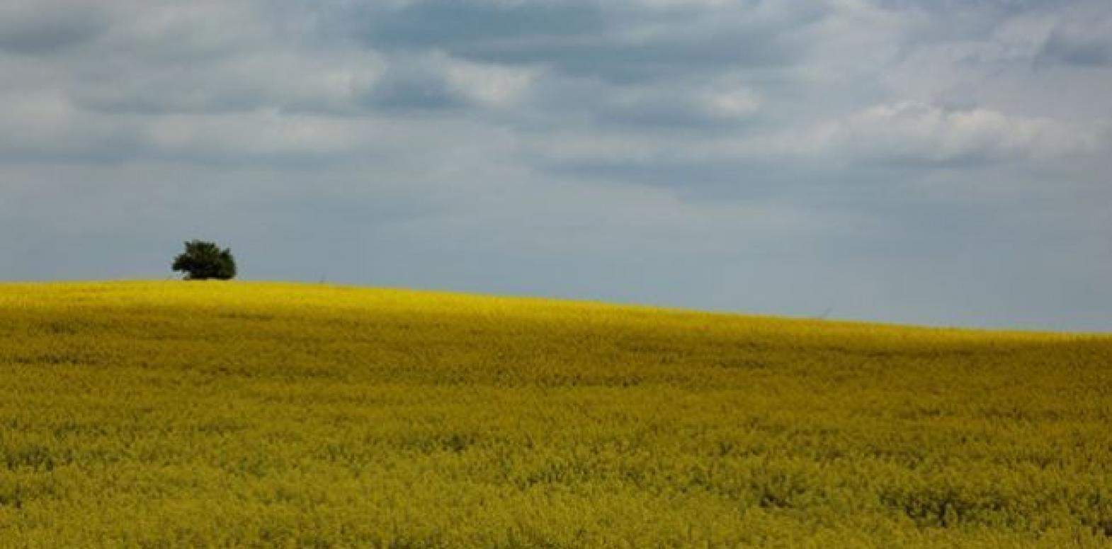На референдуме две трети украинцев проголосуют против рынка земли