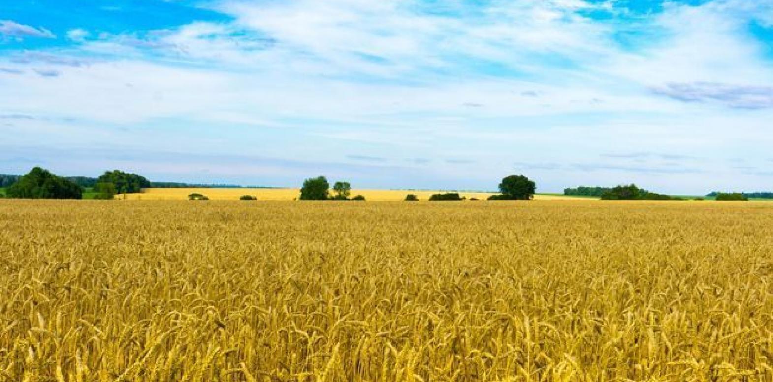 В Минэкономики назвали среднюю цену за гектар земли