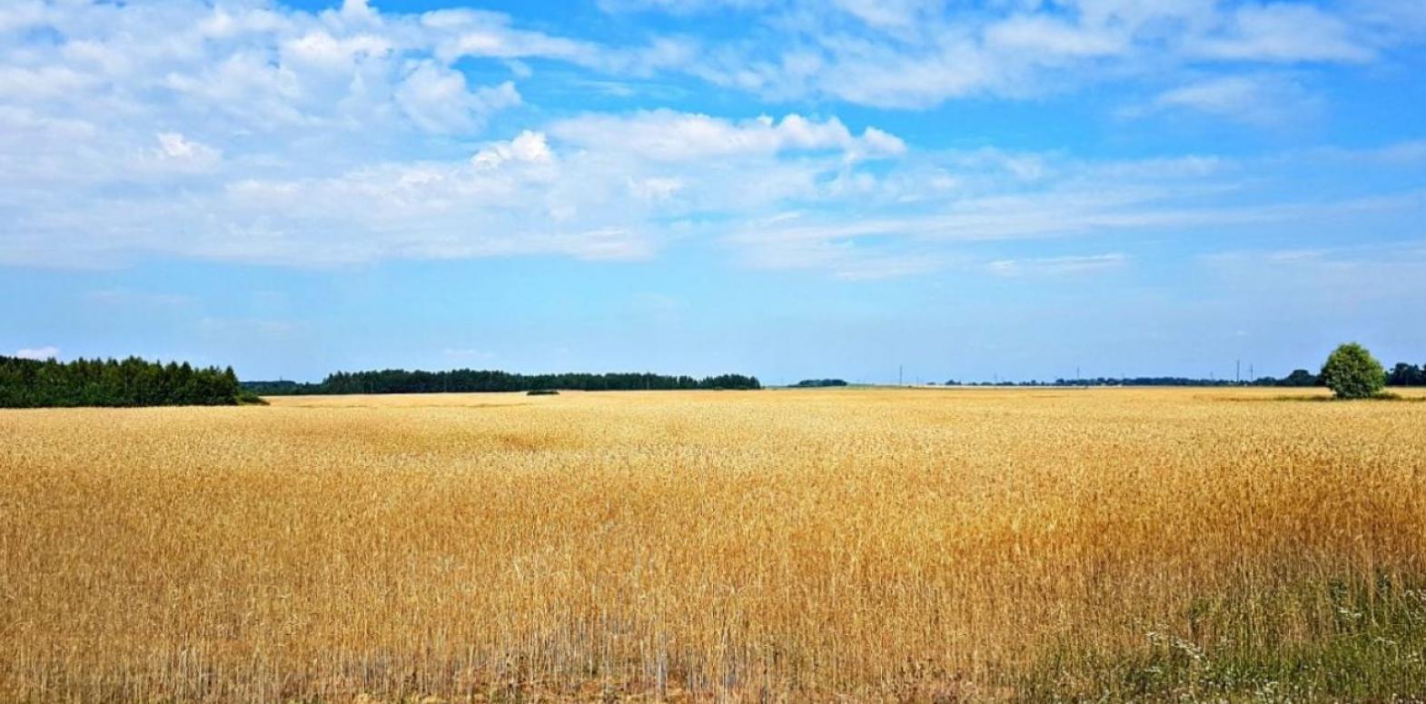 Украинцев предупредили о возможности потери земельных участков и паев: как это предотвратить